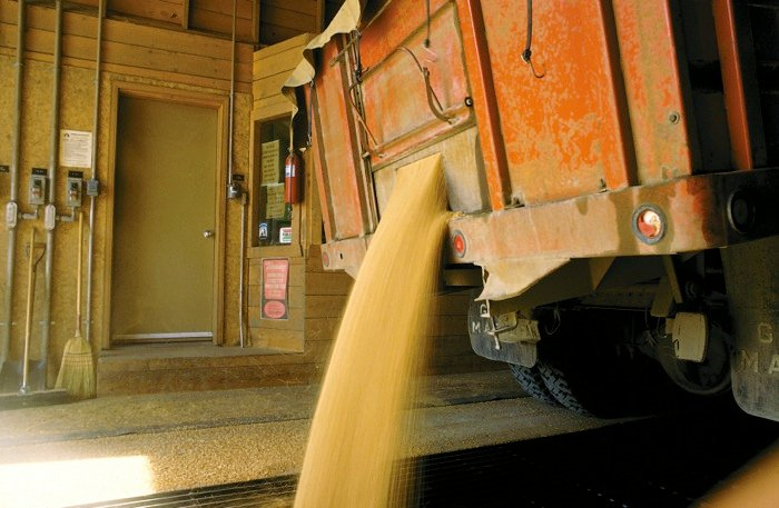 truck dumping its load of grain