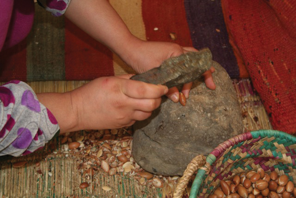 The kernels are extracted from the goat dung by hand.