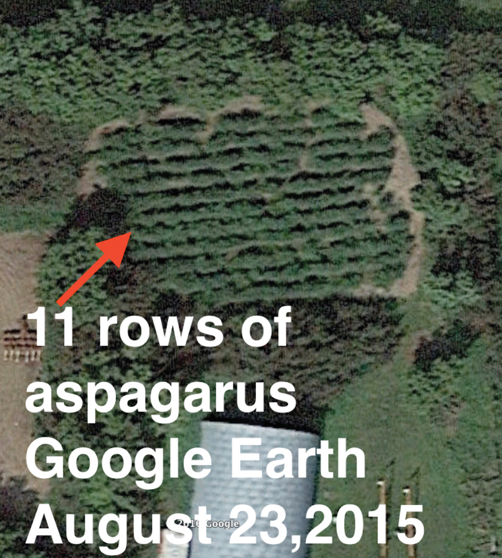Asparagus rows visible from space? Google Earth image.