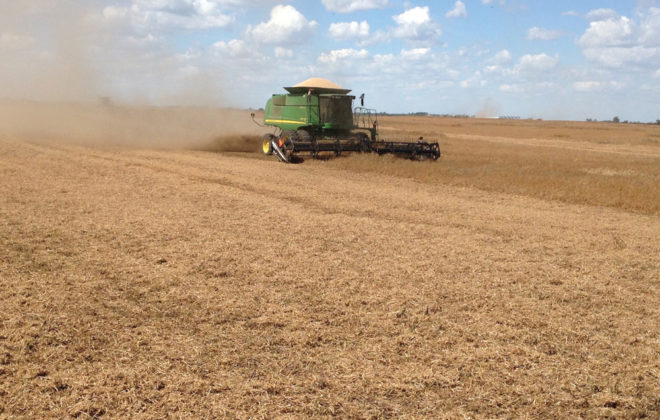 This is my good neighbour Iver Johnson with his 9770 and MacDon header cutting peas on the farm of another good neighbour Curtis Block near Dundurn, Sask., on August 16, 2016. The crop yielded 50 bushels per acre of of beautiful white peas. The MacDon header is a real cutting machine and Iver made good time. Curtis and Iver work together and it is a great thrill for this old fossil to watch it all happen. During harvest, Iver traded up to an S 680, so now they have two S 680s at work.