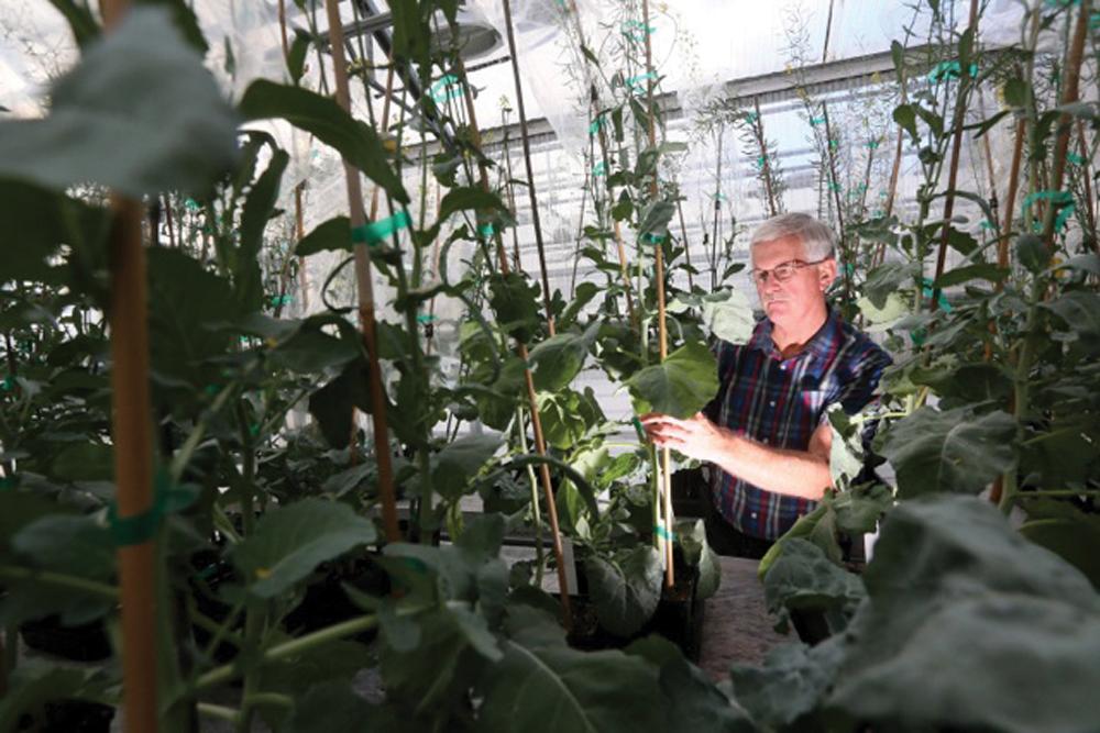 Dr. Jim Radtke, Cibus' senior vice president, product development, explains that Cibus' breeding method results in SU-tolerant, non-GMO canola.