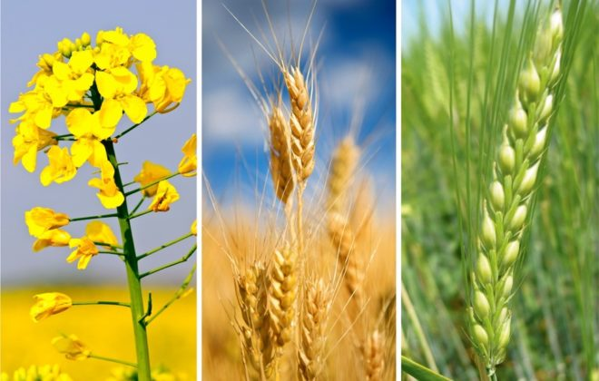 What does the harvest mean for the market?