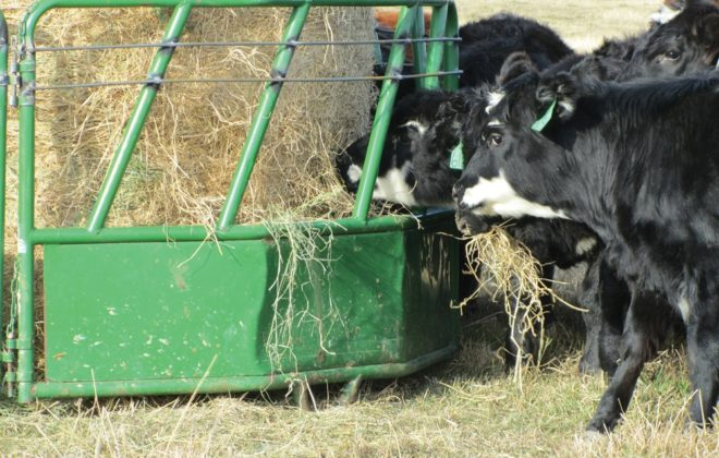 After a bit of trial and error we discovered a simple and inexpensive way to modify these feeders to prevent the heifers from climbing in.