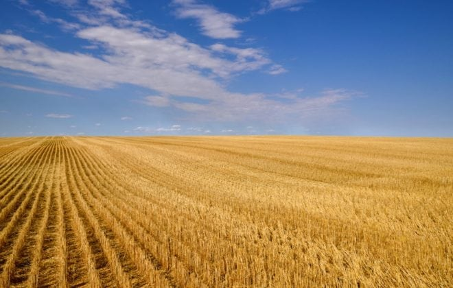 Landscape featuring a harvested grain field
