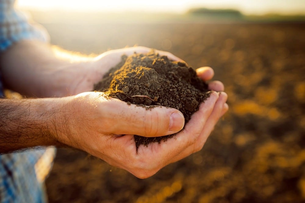 Handful of arable soil in hands of responsible farmer, close up, selective focus