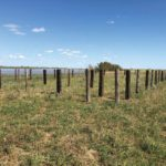 Posts are set for a new corral on pasture.