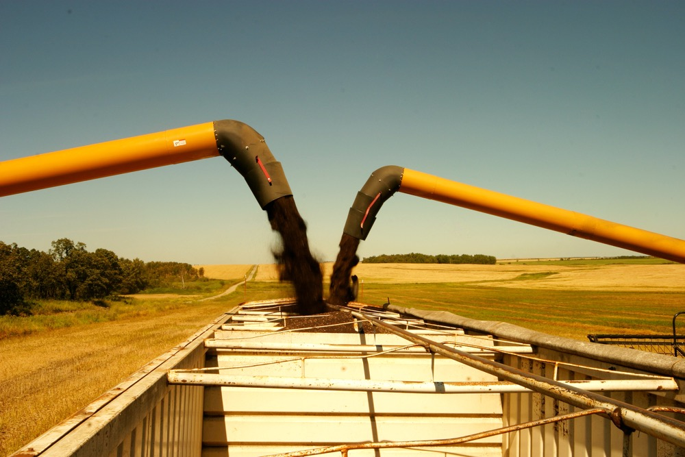 With a poor crop in parts of the EU this year, Canadian grain marketers say demand potential for Prairie canola shipments could increase as high as 1.5 million tonnes.