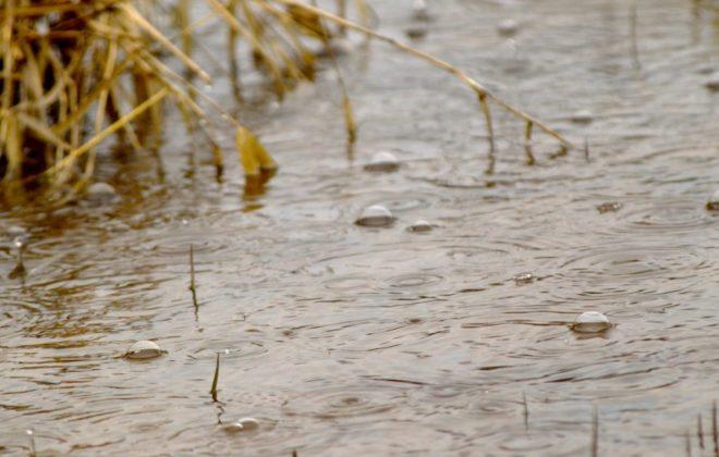 Sask. farmers dry grain, wait on weather to resume harvest