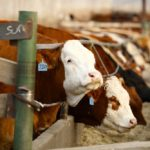 A few tips on livestock risk management