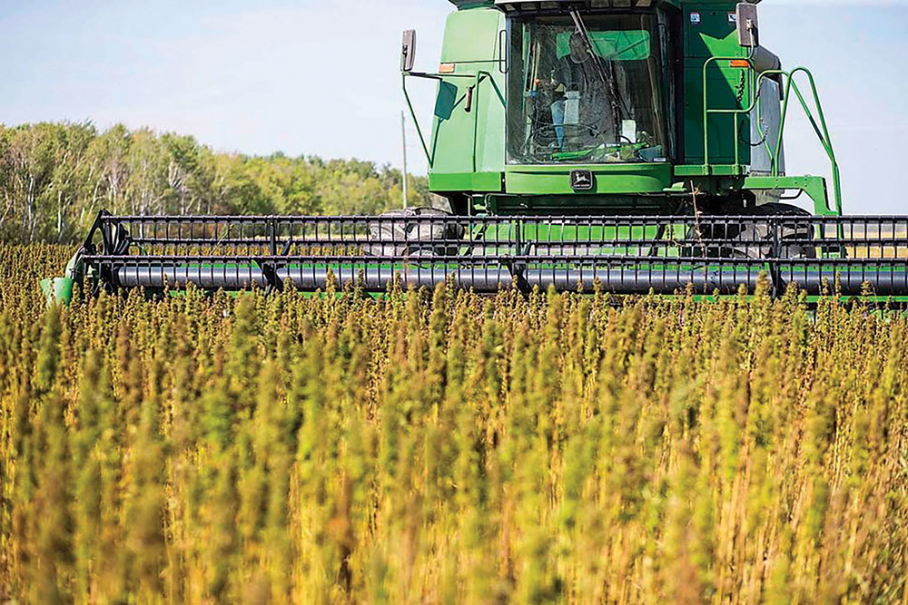 With lighter regulations and more agronomic information available, is this the year to grow hemp on your farm?