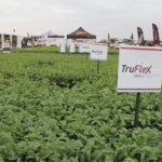 TruFlex is game-changing tech for canola