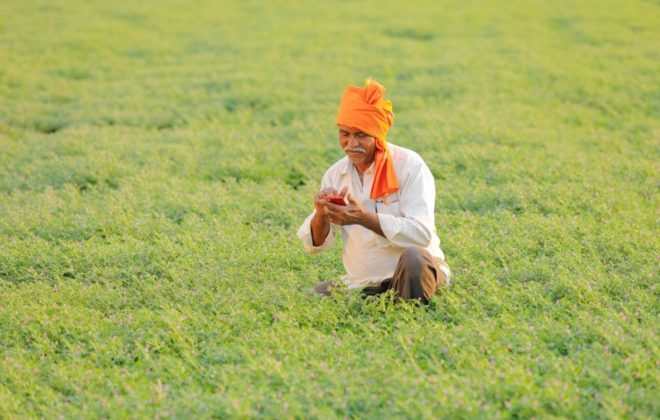 A chickpea crop in India. (Nikhil Patil/iStock/Getty Images)