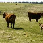 Use records to make better herd management decisions