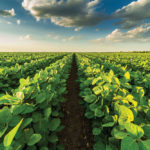How biostimulants work to enhance plant growth
