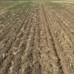 Crop advisor casebook: Bare patches in lentil crop puzzles Sask. grower