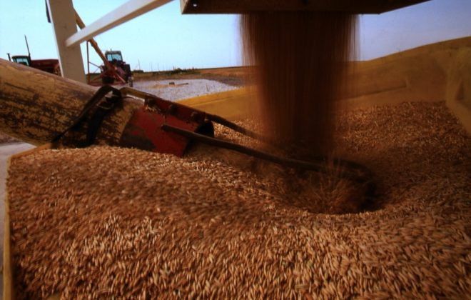 When outside influences drive world markets, there are a number of ways to price your grain for next year.