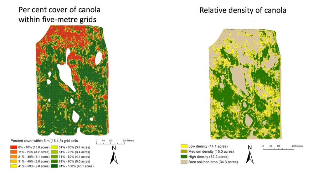 The amount of damage caused by cutworm feeding on canola seed-treated with an insecticide was measured. Manned aircraft were used to collect images on 90 acres. Field and data analysis was performed to develop relative density, and per cent cover maps were created to provide an objective estimate of cutworm damage.