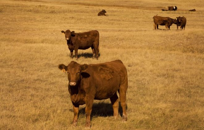 The many aspects of herd health on pasture