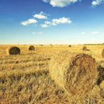Sixteen reasons why grain growers should never sell crop residues
