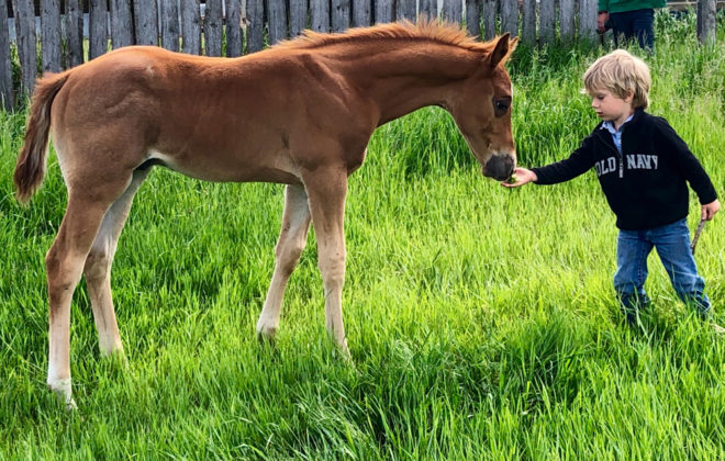 Joseph and one of the new foals exchange greetings.