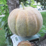 Ted nominates this melon from the garden as his favourite of 2020