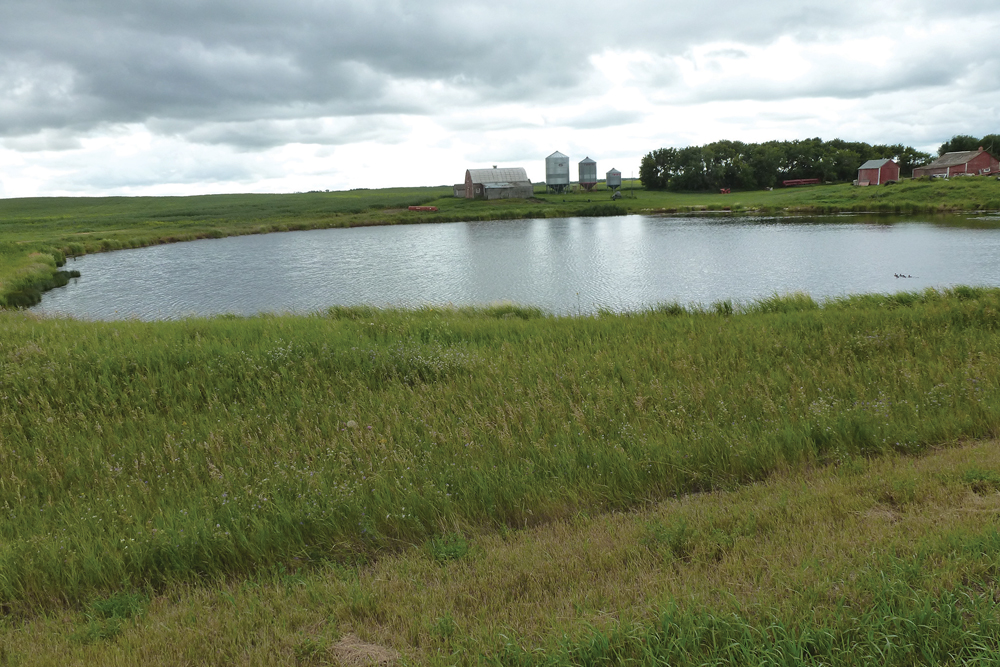 The slough next to my farmyard July 29, 2013. See below how it looks seven years later.