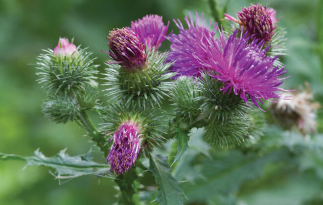 Get a jump on next year's weed management