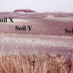 Les Henry: The importance of naming soils