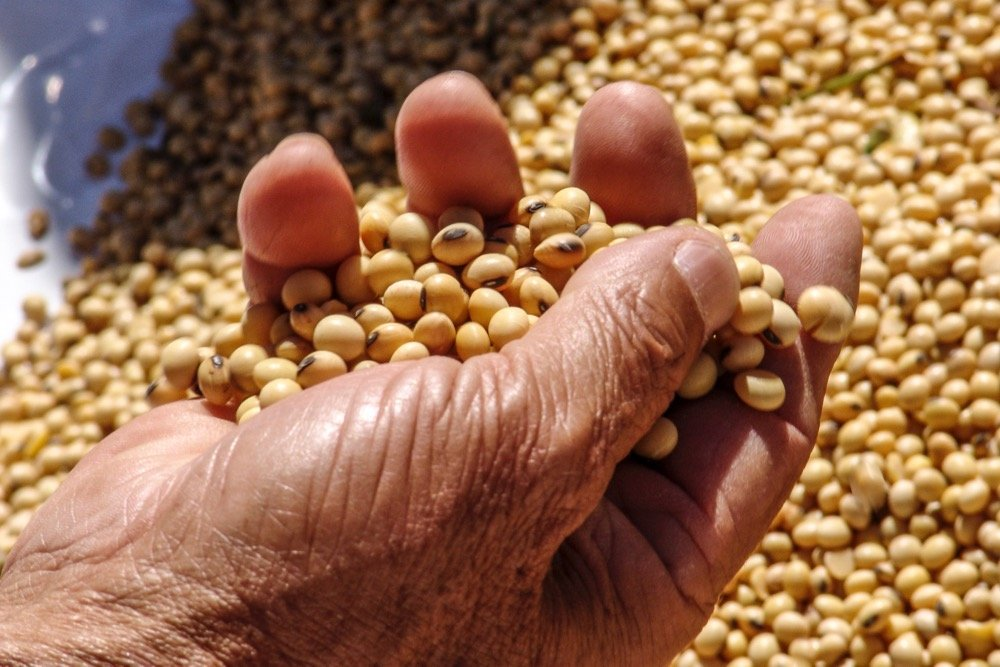 Soybeans. (Alfribeiro/iStock/Getty Images)