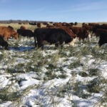Improving pastures through regenerative agriculture