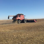 Soybeans have potential, but need a bit of work