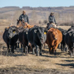 Ranchers apply new practices summer and winter