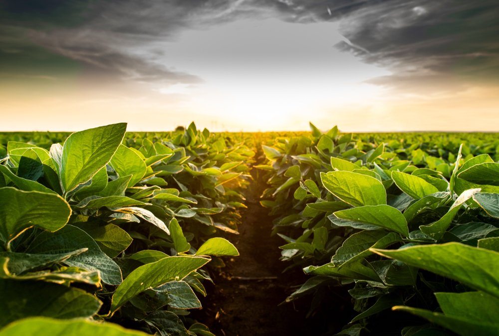 Practical tips for soybean seeding success