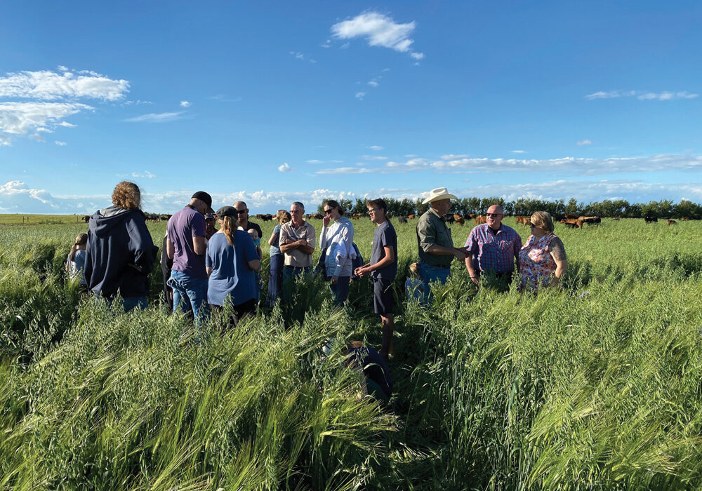 Several participants attended a field day on Walker Farms to have a look at the cocktail blend of forages. Cattle, in the background, will eventually move into this productive feed as part of a high-intensity, rotational grazing program.